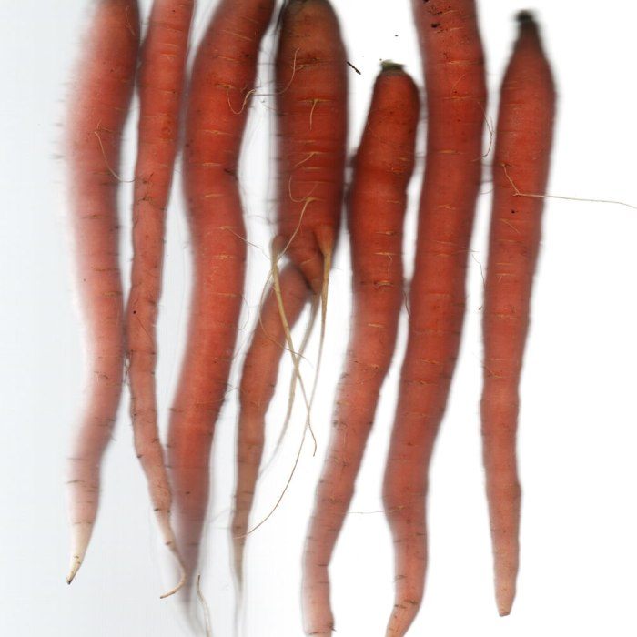 Underwood Family Farms Carrots