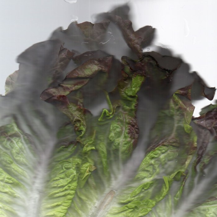 Beautiful Lettuce from Underwood Family Farms